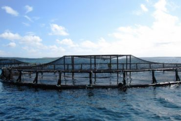 Fish-Farming-Aquaculture-NOAA-National-Ocean-Service-small-600x320