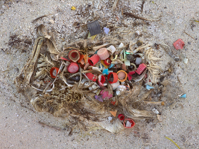 Ocean Plastic Estimated at 5.25 Trillion Pieces